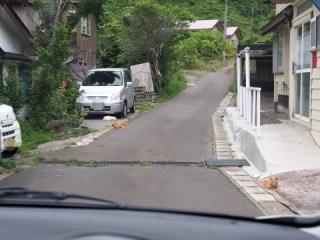 北海道の猫ども2