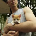 フリマで会った子ネコ