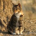 野生動物を観察2