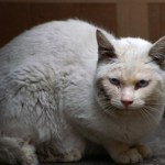 かわいいネコたん0219