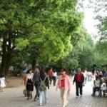 上野公園のネコども
