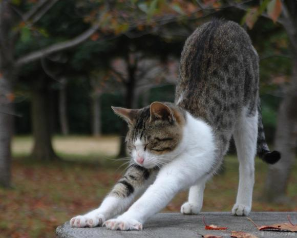 「猫のび」の画像検索結果