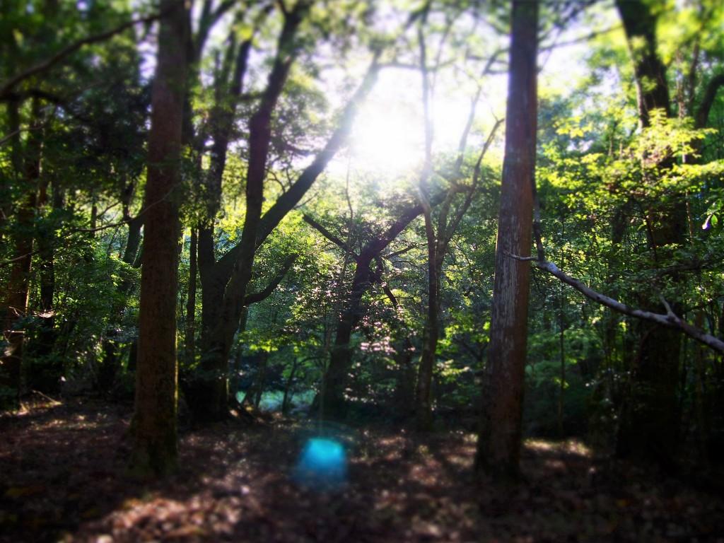 吾平山陵の木立