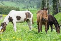 道中には普通に馬がいます。