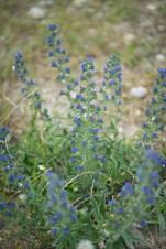 荒れた大地に咲く美しい花