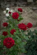 周囲にはバラが