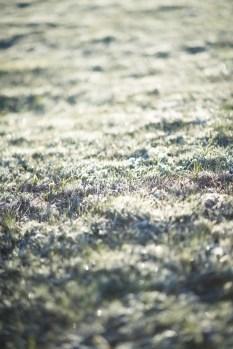 霜が夜の寒さを物語っています