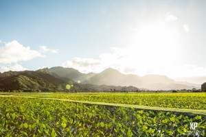 In the late afternoon during the winter, the sun sets behind the mountains and creates a blinding but beautiful scene over the Taro Fields