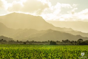 Big waves cause mist to flow over the Hanalei Taro Fields and create an all too beautiful orange haze