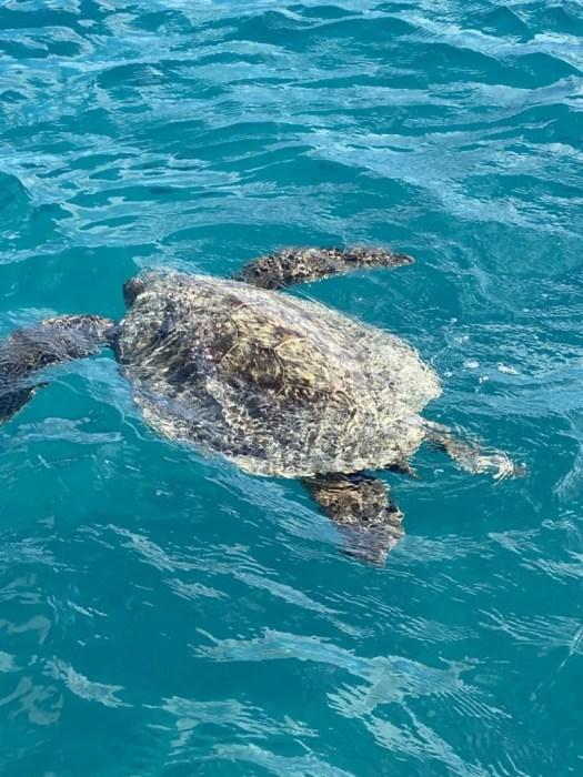Waikiki Catamaran Snorkeling tours