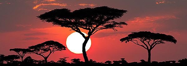 Sehnsucht Afrika - Reiner Harscher
