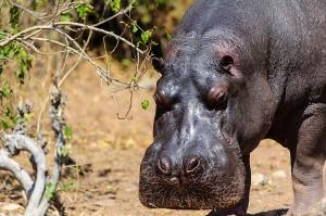 vortrag-tiere-afrikas-03