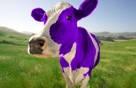 10 cosas que aprendí del libro de marketing: La vaca púrpura