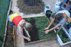 Planting Amelies garden