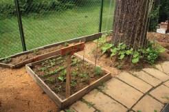 Amelia garden growing