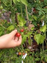 Garden foraging