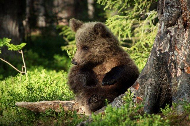 Неподражаемые животные (45 фото)