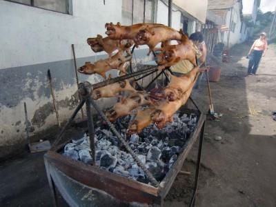 エクアドル料理クイの丸焼き