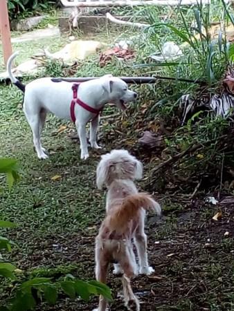 タイ、ペット事情
