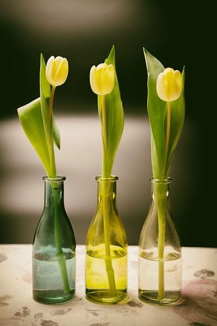 tulips-4030592_640