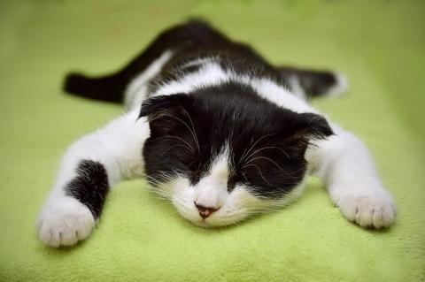 cat-2605502_1280