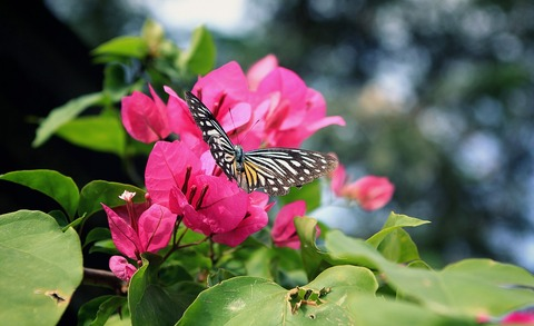flower-1720611_1280