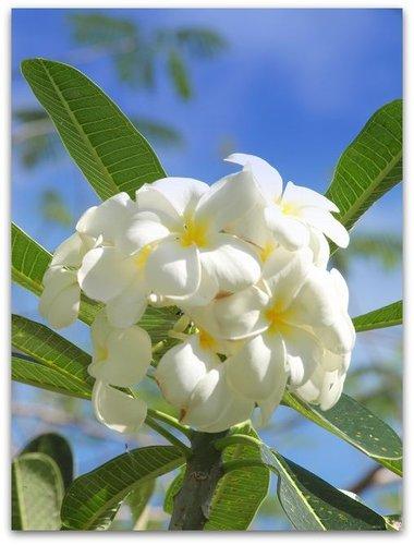 Tropical-Bouquet