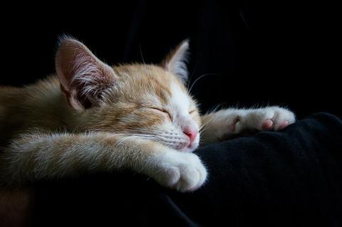 cat-1056661_640