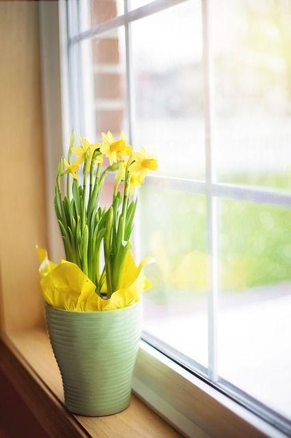daffodils-1316128_640