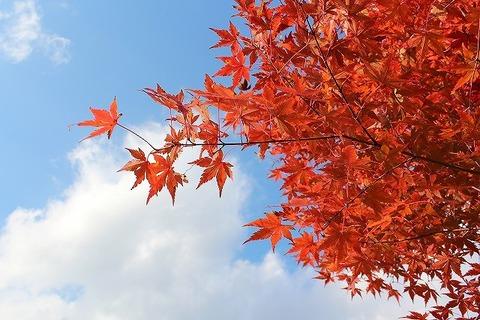 Fall in 2011 006