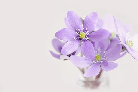 flowers-1358908_640