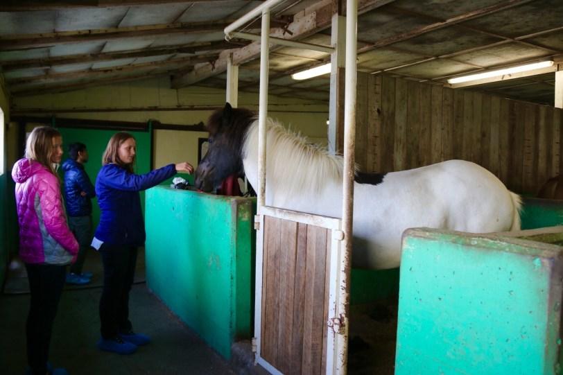 Gauksmyri Icelandic horse farm