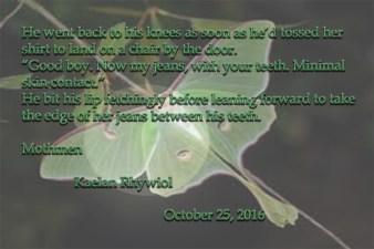 Mothmen Blurb 5