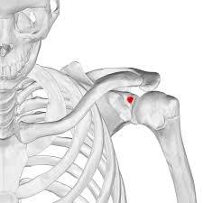 左肩が上がらない患者さんが意外な事で良くなった1症例