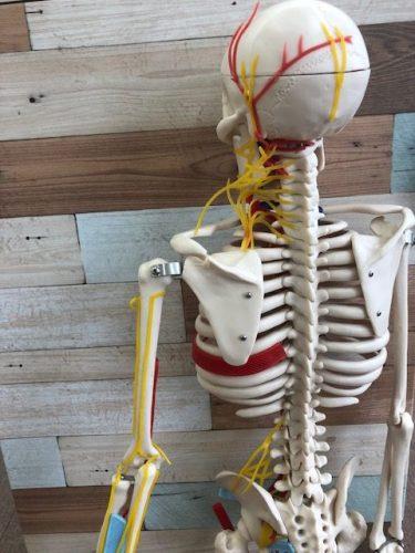 左肘を曲げると痛い患者さんの1症例