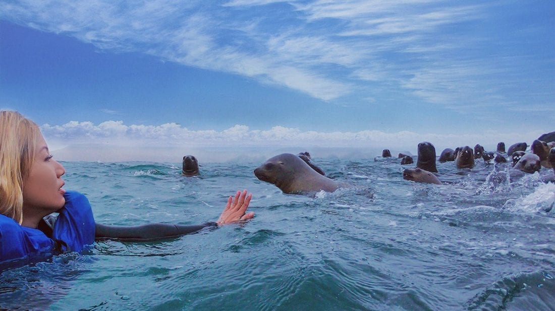 Swimming-with-sea-lions-in-Peru-11
