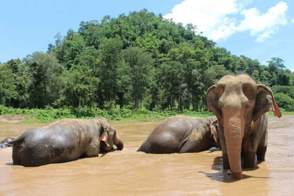elephant-chiang mai 10 day Itinerary Southern Thailand