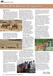Wild Horses Perspective - Part 1 - cover