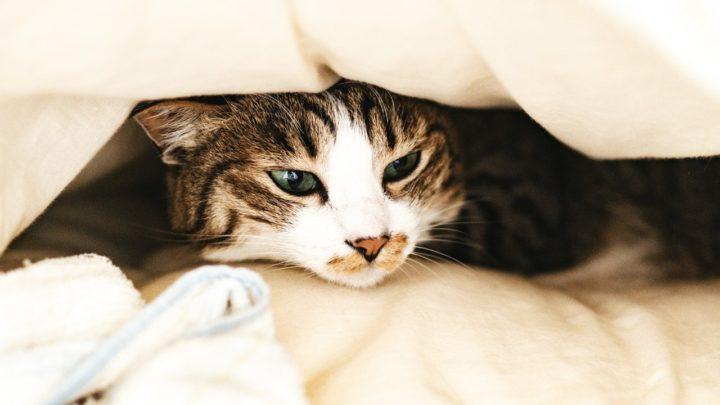 枕は低反発か高反発のどっちを使う?あなたにあうのはコレだ!!