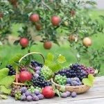 5月の果物狩りの旬のフルーツは?服装や持って行くのに便利なものは?