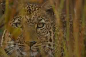 This beautiful cat (and another) provided great sightings on a drive down the new spinal road