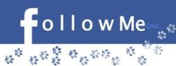 followmeow