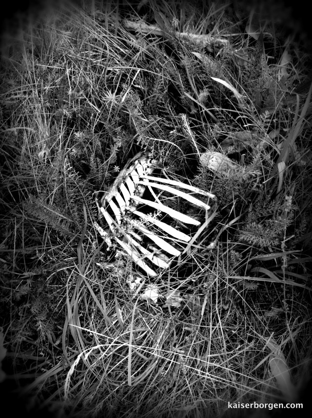 Dead animal
