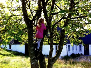 Baby Bunny in a walnut tree.