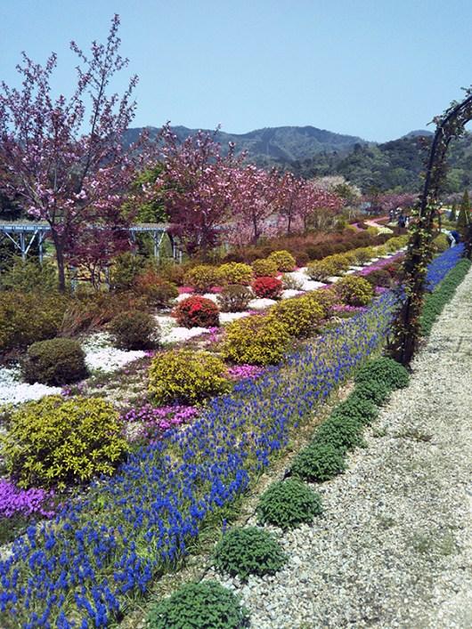 整備された花の路(花郷OKADA)