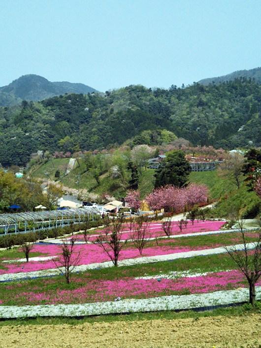 広大な敷地(花郷OKADA)