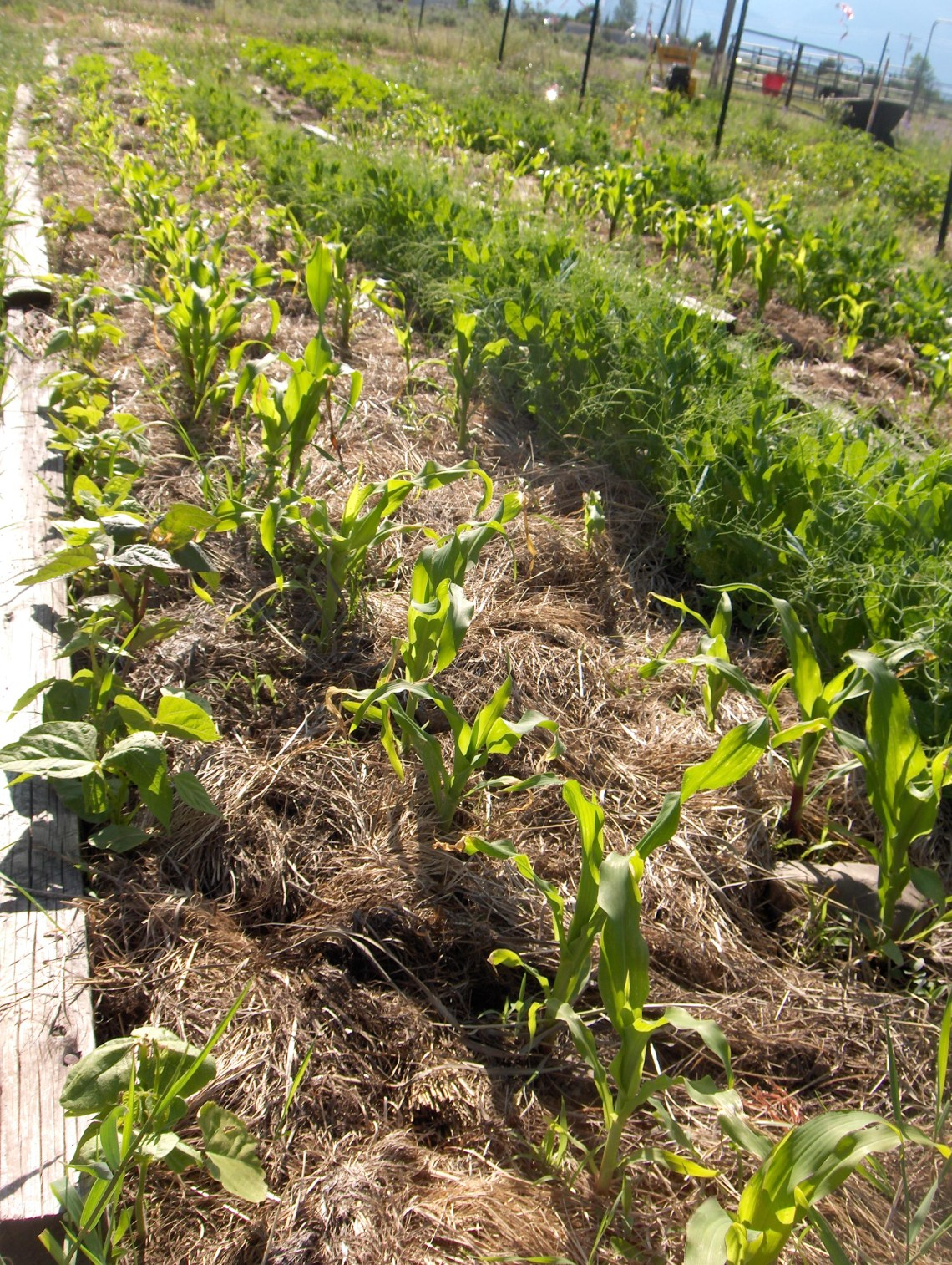 Should You Use Hay as Mulch in Your Garden? ~ Kaits Garden