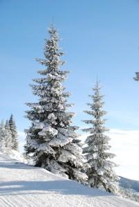 winter-5701_640