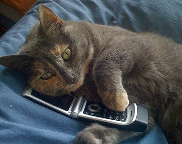 The cat's cell phone