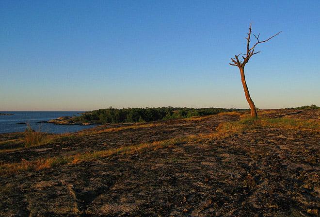 Träd på Bockö